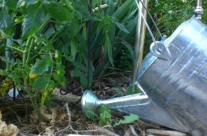 Propped up watering can