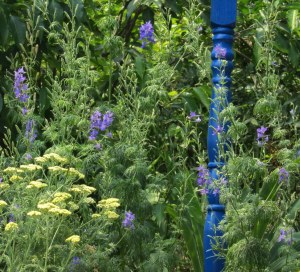 Larkspur and yellow yarrow last July.