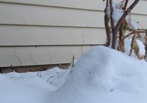 Melt, snow! Sigh...